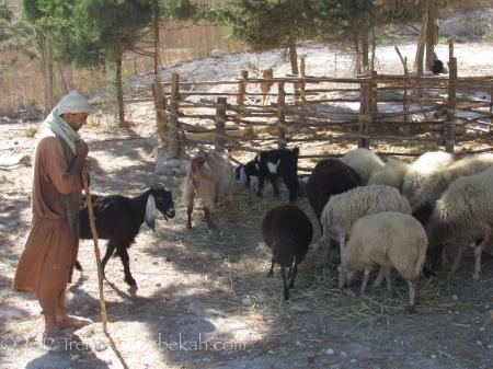 Shepherd Nazareth Village