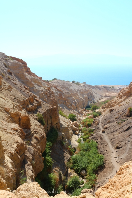 View of the wadi David at En Gedi, looking toward the Dead Sea