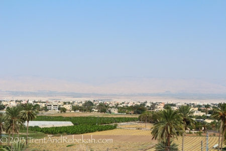 Palm trees and other agricultural items from Jericho